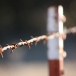barbed (3)